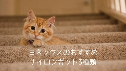 f:id:chatoracat:20181021004229p:plain