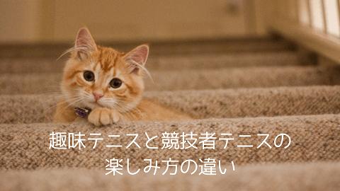 f:id:chatoracat:20181021005557p:plain