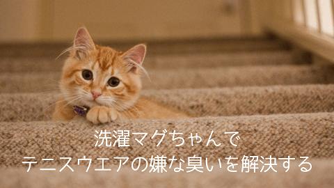 f:id:chatoracat:20181021005901p:plain