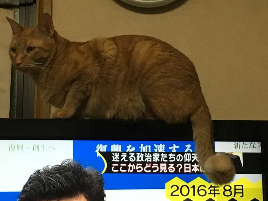 f:id:chatorakun:20161225231154j:plain