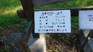 f:id:chayarokurokuro:20200623222112j:plain