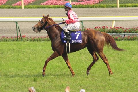 アサクサデンエン2005安田記念