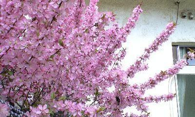 f:id:cherryblossom:20090325142348j:image