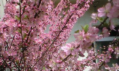 f:id:cherryblossom:20110407101155j:image