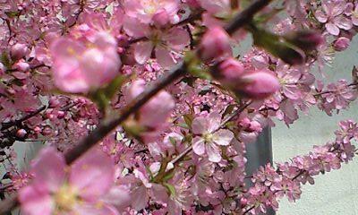 f:id:cherryblossom:20110407101257j:image