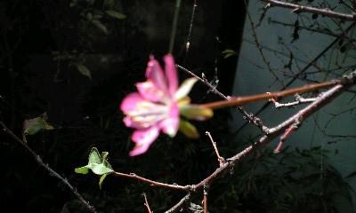 f:id:cherryblossom:20121021103008j:image