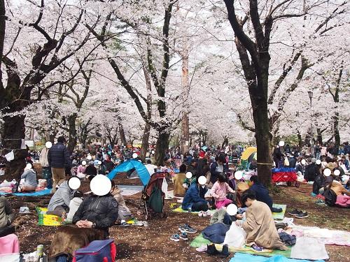 f:id:cherrypie-saitama:20190331225636j:plain