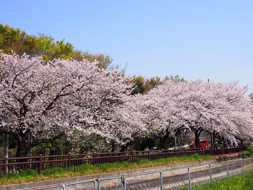 f:id:cherrypie-saitama:20190407155307j:plain