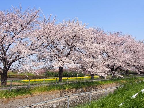 f:id:cherrypie-saitama:20190407155328j:plain