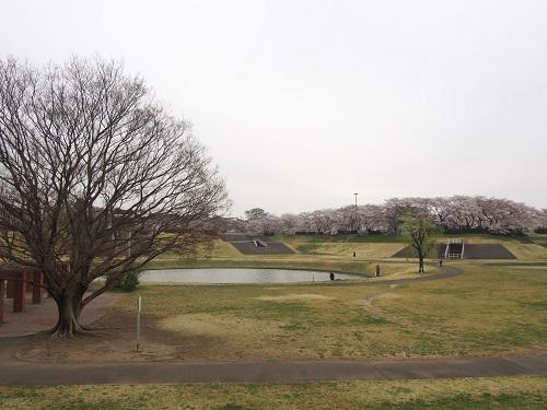 f:id:cherrypie-saitama:20190408134145j:plain