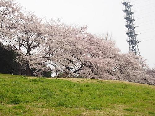 f:id:cherrypie-saitama:20190408134149j:plain