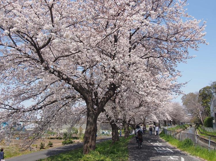 f:id:cherrypie-saitama:20210923220741j:plain