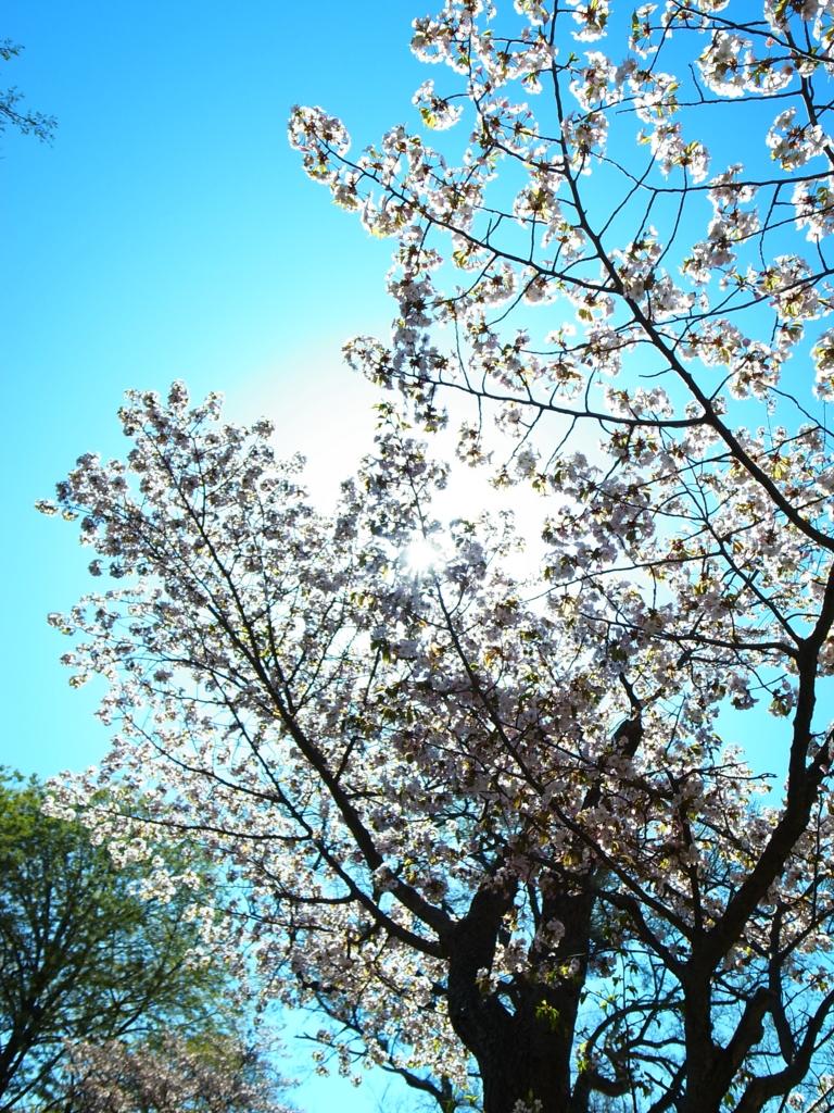 f:id:chi-ron-nu-p:20170504093243j:plain