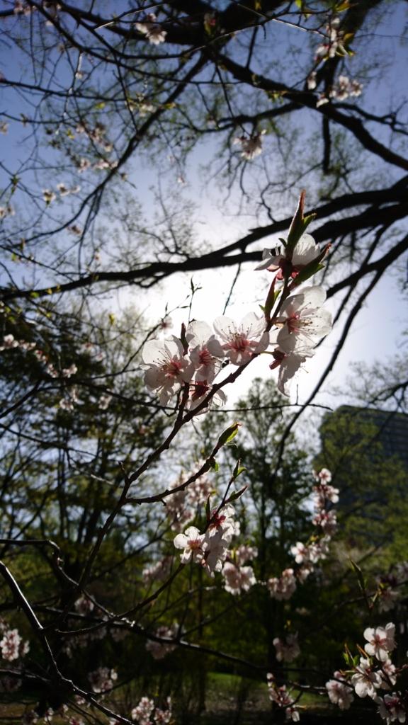 f:id:chi-ron-nu-p:20170509080037j:plain