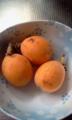 [果物] びわ