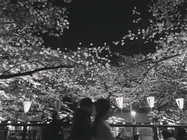 f:id:chiakiyukio:20181206010259j:image