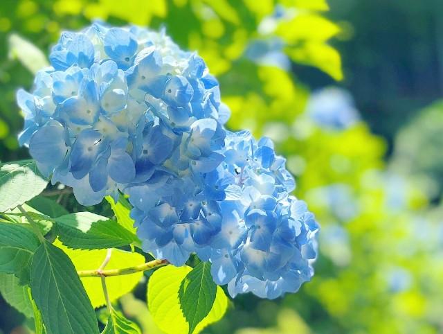 f:id:chiakiyukio:20190607002153j:image
