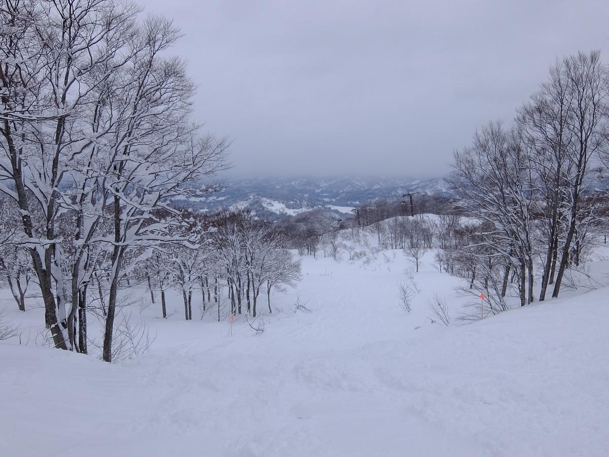f:id:chiba-snow:20191207152725j:plain