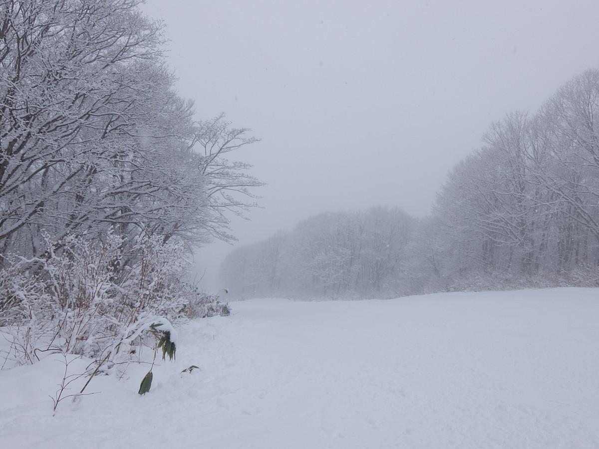 f:id:chiba-snow:20200127222721j:plain