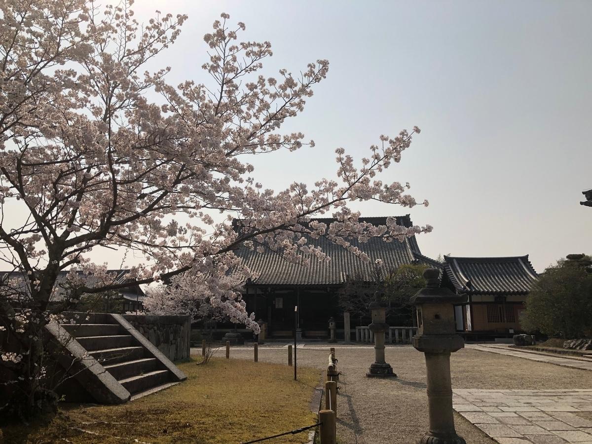 西大寺 剛桜