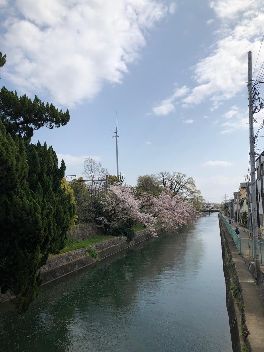 伏見稲荷,京都,kyoto,桜,伏見