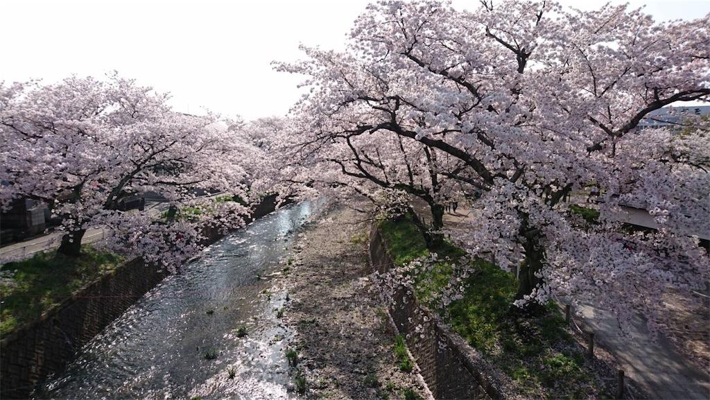 f:id:chibi_cafe_yu:20170419204710j:image