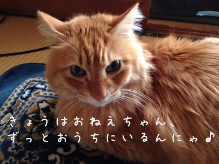 f:id:chibineko:20140103163501j:image