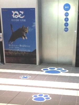 会場エレベーター前(2013/08/19)