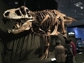 [恐竜博2019]ティラノサウルス(2019/09/26)