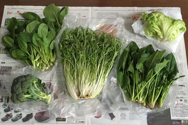 野菜いろいろ(2020/01/05)