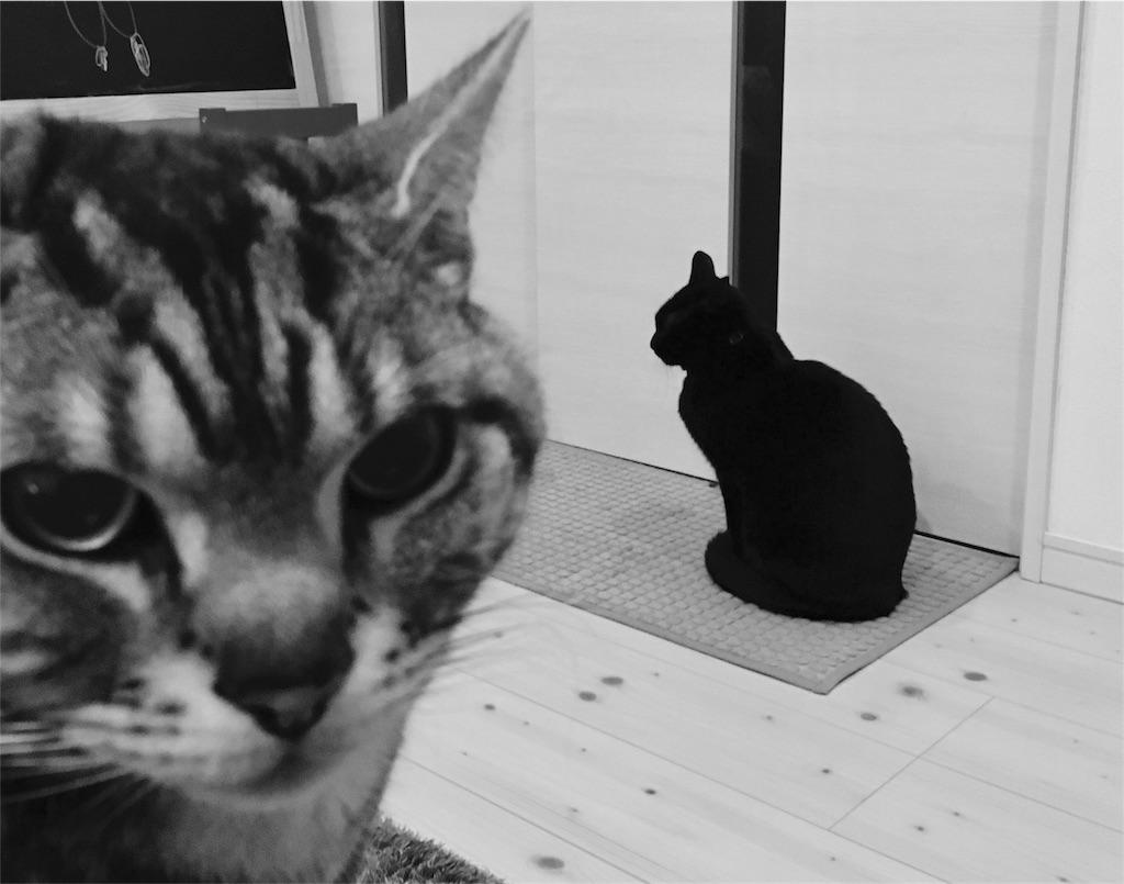 f:id:chibo-kyu:20170125180633j:image