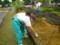 苗畑除草作業
