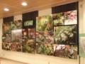 ワサビ沢展示室企画展示「秩父演習林の春夏の花」