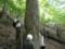 シオジ林での植生調査
