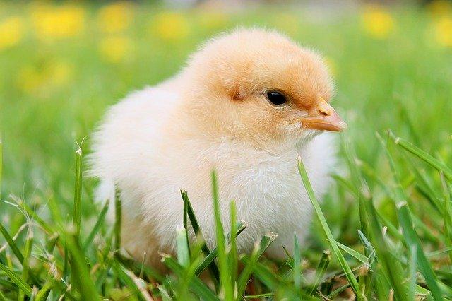f:id:chicken-no-tabi:20210215113813j:plain