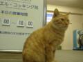 [江ノ島][猫]