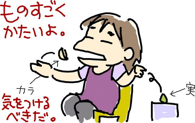 f:id:chiekichi:20080617004202j:image