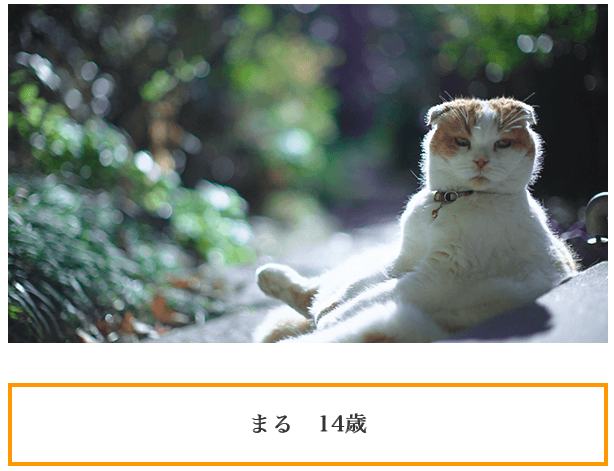 f:id:chigau-mikata:20180306103216p:plain