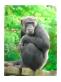 f:id:chigau-mikata:20181122114435p:plain