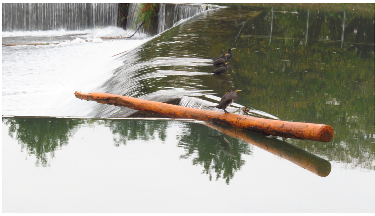 流木に乗る鳥①