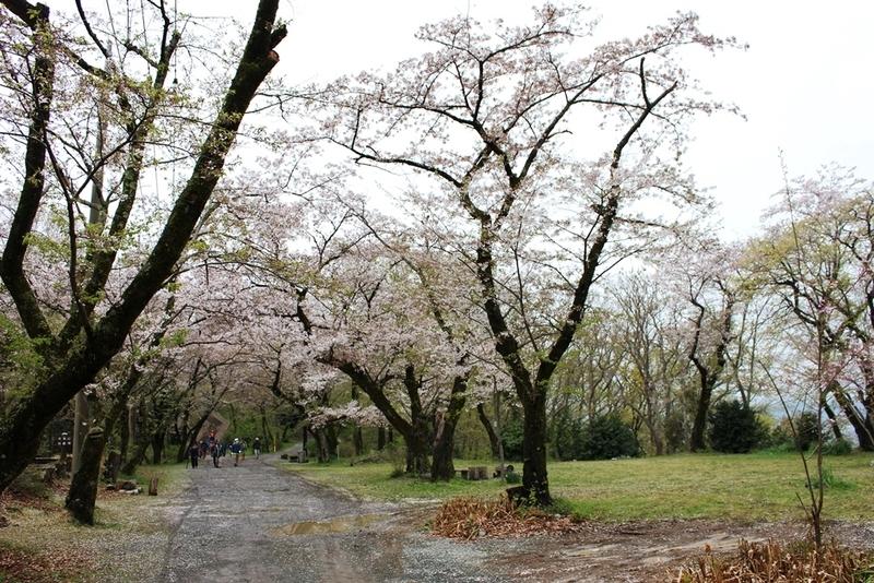 馬場道の桜並木