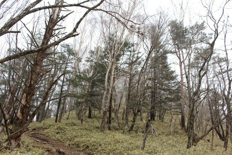 樹林に囲まれた道