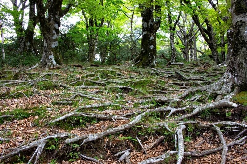 剥き出しになった木の根