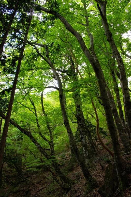 青々とした木々