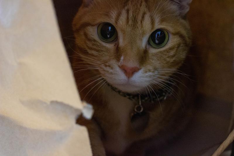 猫の写真1