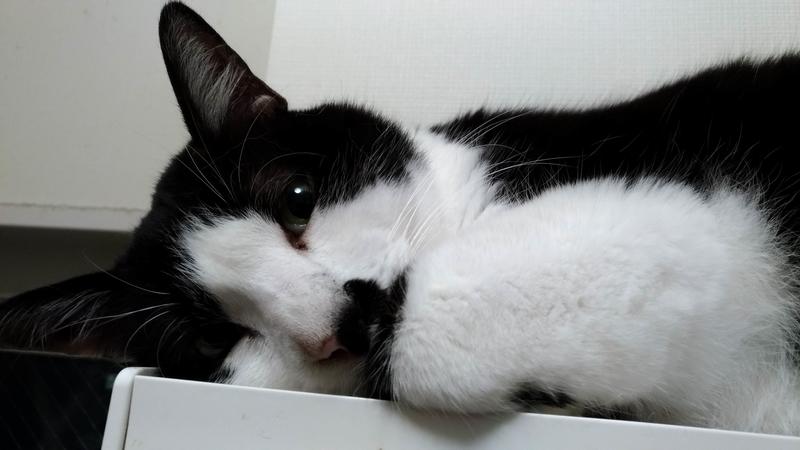 猫の写真3