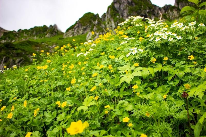 花と山の風景
