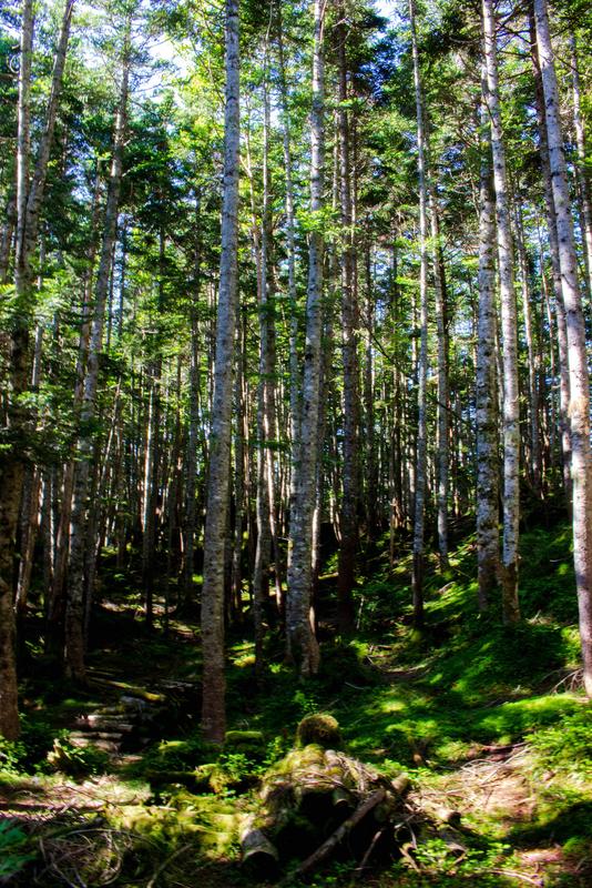 森林の様子