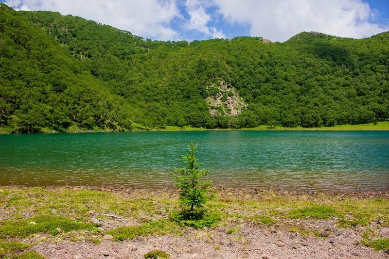 水辺に生える木。