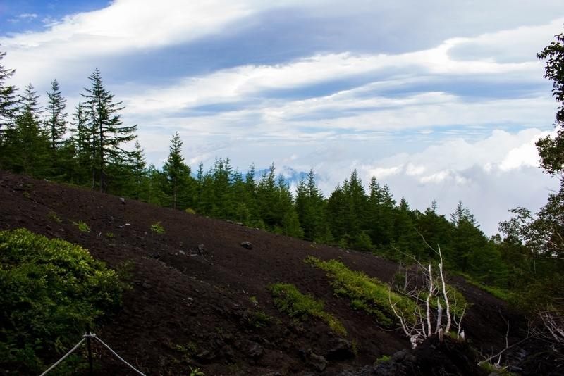 樹林帯が途切れた地点の写真